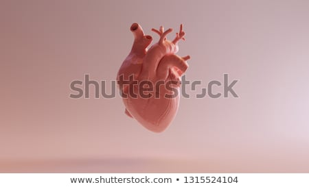 model of heart Stock photo © mastergarry
