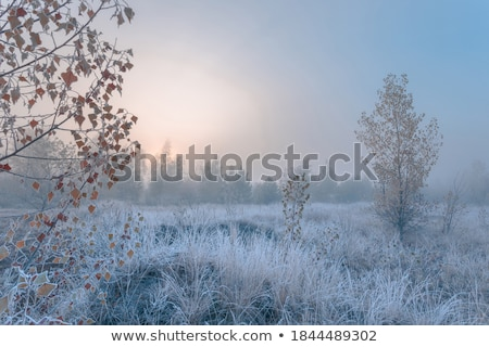 Misty and frosty morning Stock photo © olandsfokus