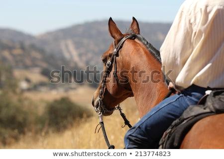 Paardenrug illustratie natuur boerderij paarden cowboy Stockfoto © adrenalina