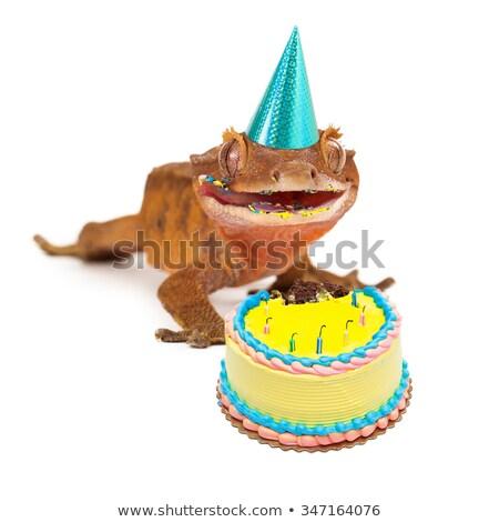 Verjaardag gekko cartoon vieren 3d render partij Stockfoto © AlienCat