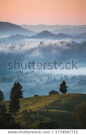 Grassland at foggy dawn Stock photo © Juhku