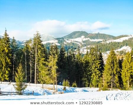 erdő · hó · fenyő · fedett · tél · tájkép - stock fotó © Kotenko