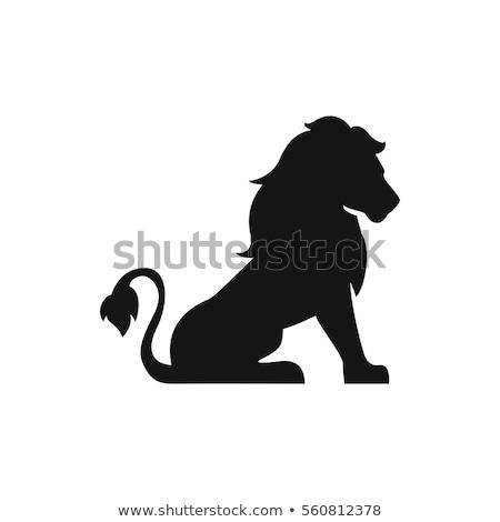 Oroszlán ikon macska fej állat rajz Stock fotó © kiddaikiddee