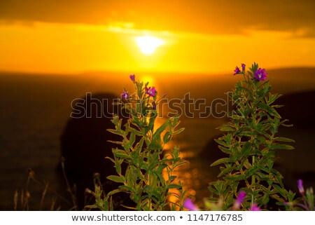 beautiful sunset over the virgin rock grass stock photo © morrbyte