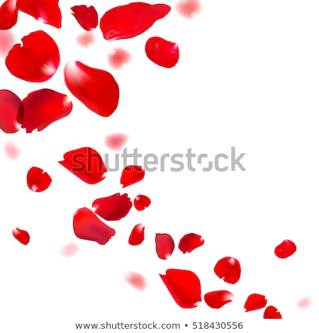 heart of red rose petals eps 10 stock photo © beholdereye