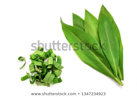 A bunch of wild garlic leaves on a white background Stock photo © g215