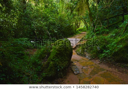 Walkway in secluded deciduous forest Stock photo © Anna_Om
