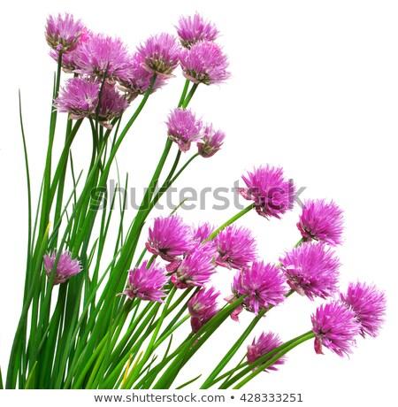 Agradable flores pequeño casa granja primavera Foto stock © jonnysek