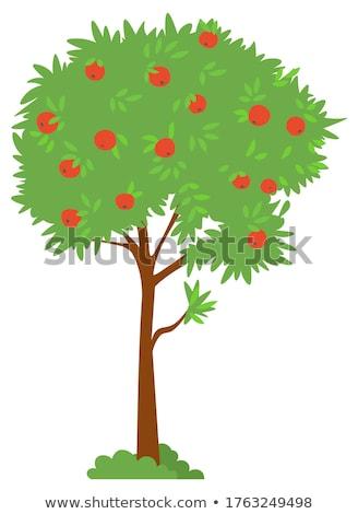 meyve · çim · görüntü · olgun · turuncu · yeşil · ot - stok fotoğraf © pressmaster