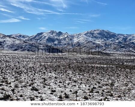 Snowy Landscape in Joshua Tree National Park Stock photo © tobkatrina
