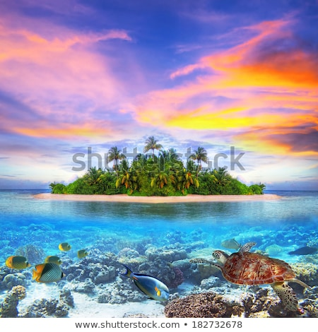 Tropical island with palm tree and turtle Stock photo © orensila
