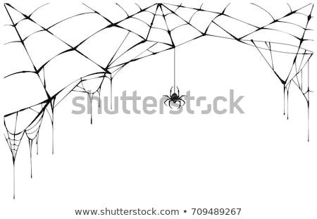 Preto aranha rasgado teia assustador teia de aranha Foto stock © orensila