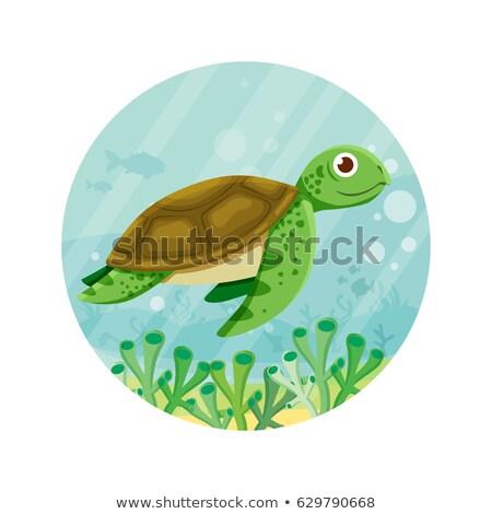 Cute schildpad cartoon vector sticker icon Stockfoto © robuart