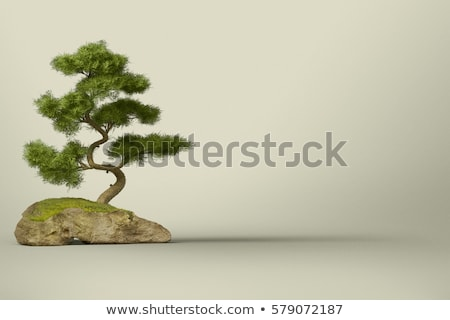 Bonsai tree with leaves Stock photo © odina222
