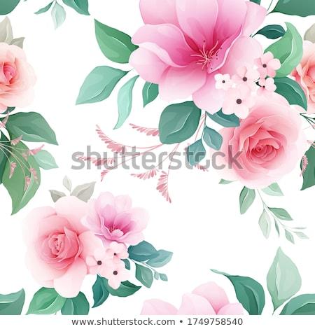Sakura çiçek yalıtılmış beyaz sonsuz Stok fotoğraf © robuart