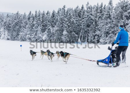 Sled and sledge-hounds in the snow and winter landscape Stock photo © Ustofre9