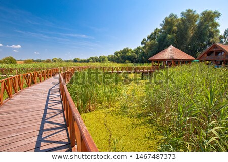 Kopacki Rit marshes nature park wooden boardwalk view stock photo © xbrchx