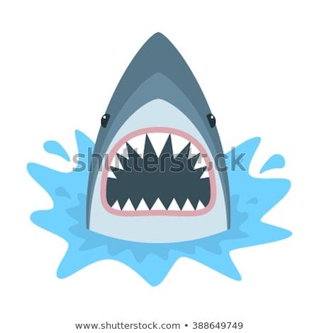 Hongerig cartoon haai illustratie naar glimlachend Stockfoto © cthoman