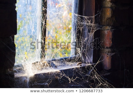 Venster spinneweb donkere rond scary duisternis Stockfoto © romvo