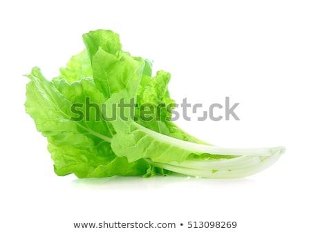 romaine lettuce leaves isolated on white background stock photo © bozena_fulawka