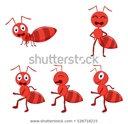 set of ant character stock photo © bluering