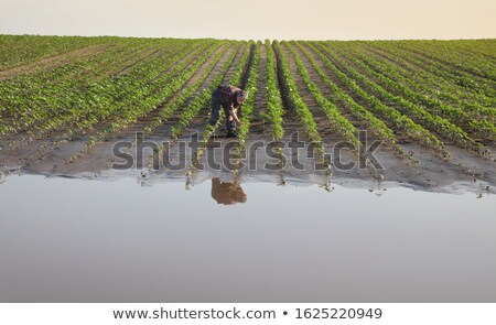 agricola · scena · agricoltore · soia · campo · cellulare - foto d'archivio © simazoran