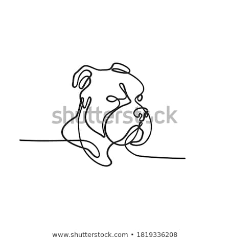 American Bully Continuous Line Stock photo © patrimonio