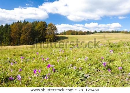 baixo · Eslováquia · árvore · paisagem · viajar · planta - foto stock © phbcz