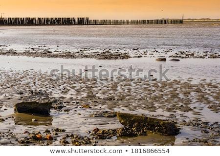 mudflat stock photo © ivonnewierink