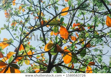 amande · arbres · arbre · domaine · paysage - photo stock © smithore