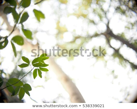 tree in spring with very shallow focus Stock photo © artush