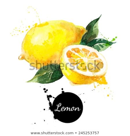 Limon Suluboya Boyama Beyaz Mükemmel Eps Vektör