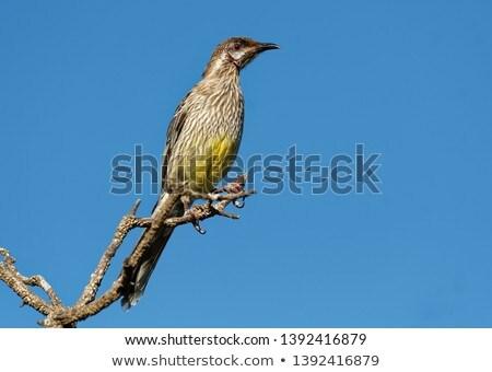 Rojo sesión árbol isla aves turismo Foto stock © dirkr