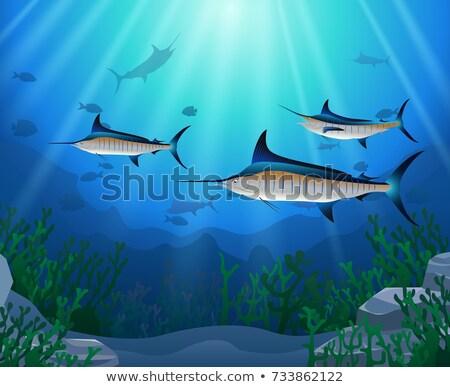 Atlantic blue marlin under the sea Stock photo © bluering
