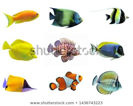 sea animals on white background stock photo © bluering