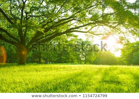 лет · Hat · плетеный · корзины · трава · небе - Сток-фото © unikpix