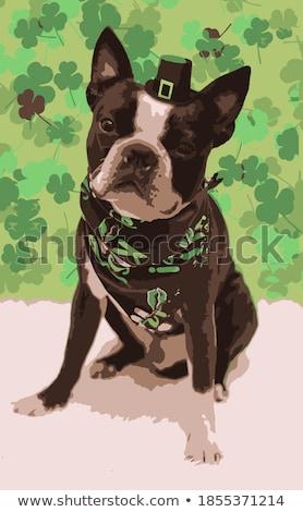 Cartoon · sonriendo · irlandés · hombre · trébol - foto stock © cthoman