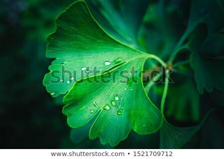 緑の葉 定型化された 緑 ブラウン 葉 ストックフォト © blackmoon979