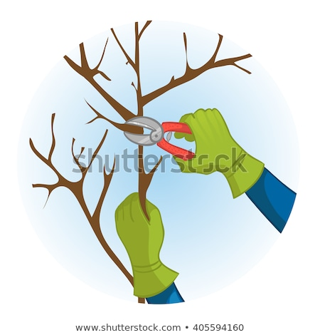 Cutting branches from tree with scissors Stock photo © carenas1
