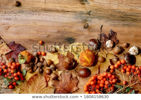 Chestnuts and pumpkin Stock photo © aladin66