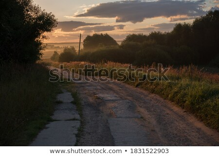 Silhouetted Grasses And Plants Stock photo © derocz