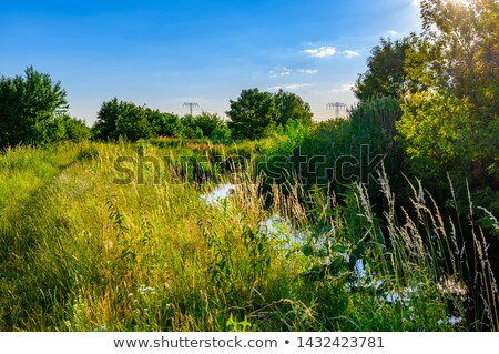 beautiful small creek surrounded by green trees stock photo © meinzahn
