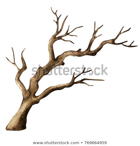 Creepy Branches Silhouettes Stock photo © derocz