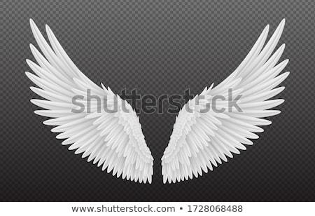 Beautiful angel Stock photo © Novic