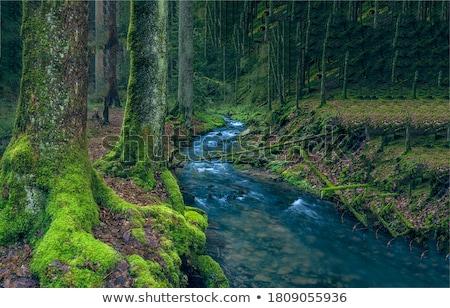 Patak selymes folyam völgy természet levél Stock fotó © pedrosala