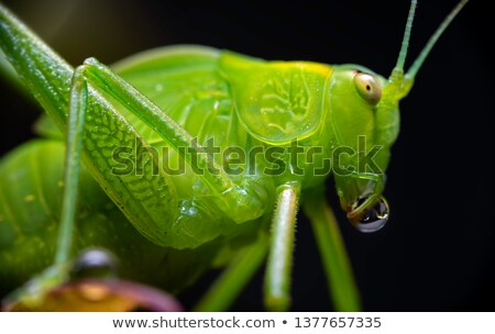 macro from insect with bubble Stock photo © compuinfoto
