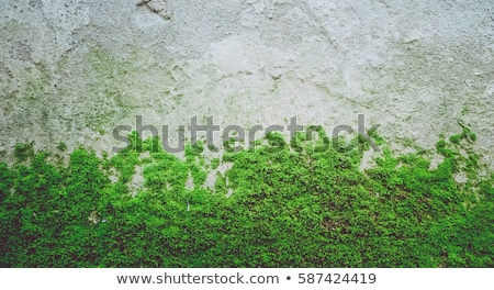 Textuur steen mos ruw groene voorjaar Stockfoto © ondrej83
