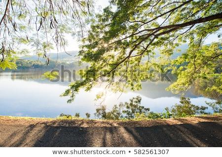 Verão nascer do sol belo rio paisagem lago Foto stock © TasiPas