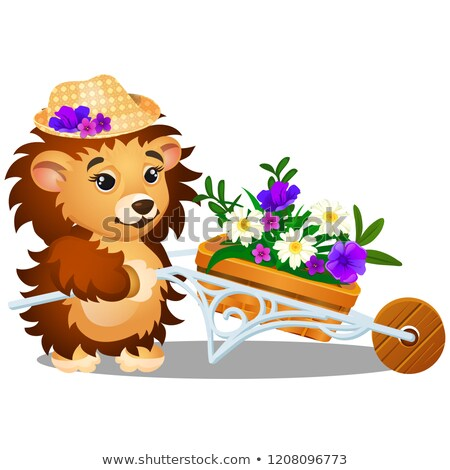 fluffy hedgehog in the garden carries a wheelbarrow of fresh flowers isolated on white background v stock photo © lady-luck