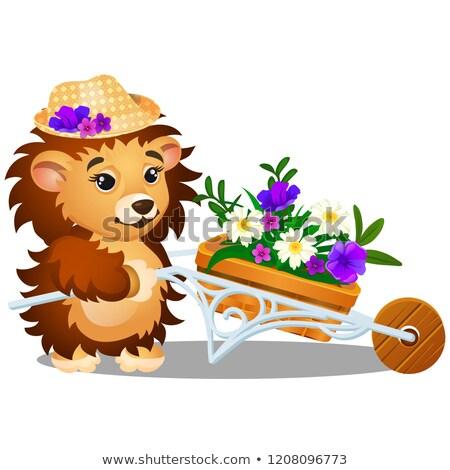 пушистый еж саду тачка свежие цветы Сток-фото © Lady-Luck